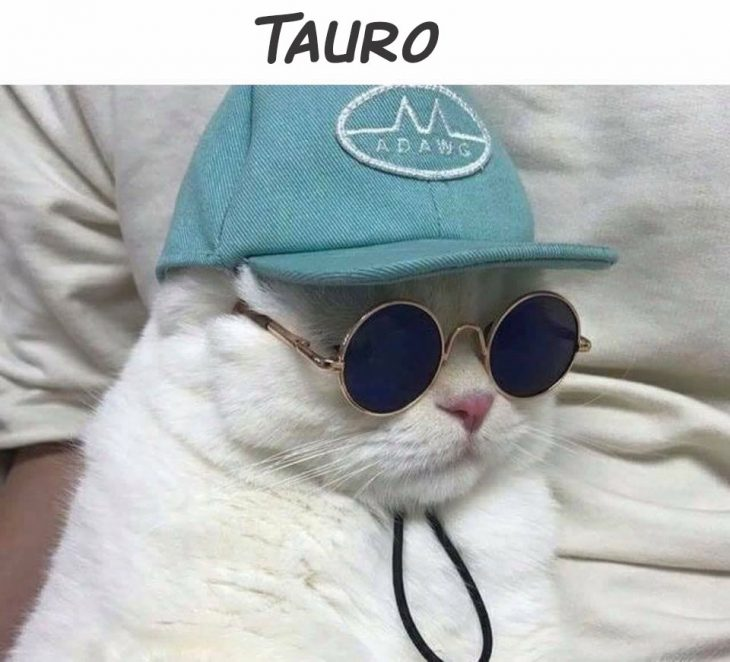 tauro gato