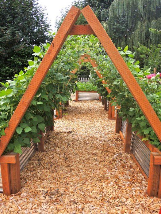 vegetales huerto casero