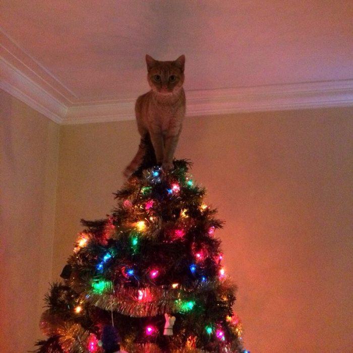 gato navidad