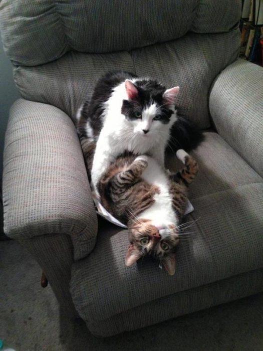 Gatos sensuales momento intimo
