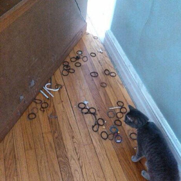 Gato ladrón de ligas