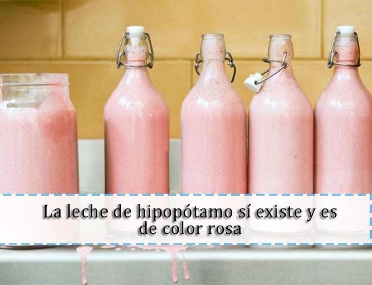 leche de hipopótamo
