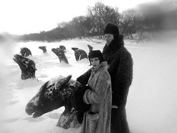 fotos caballos congelados