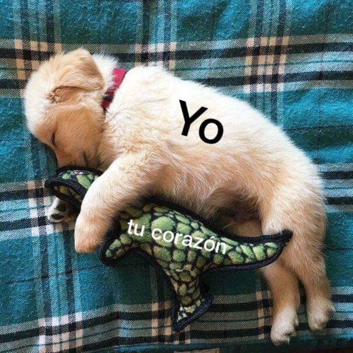 perrito meme