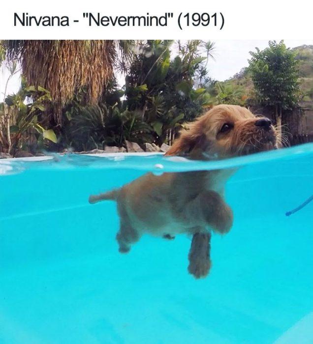 nirvana perrito