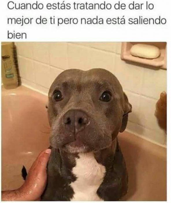 perrito asustado los mejores memes de perritos