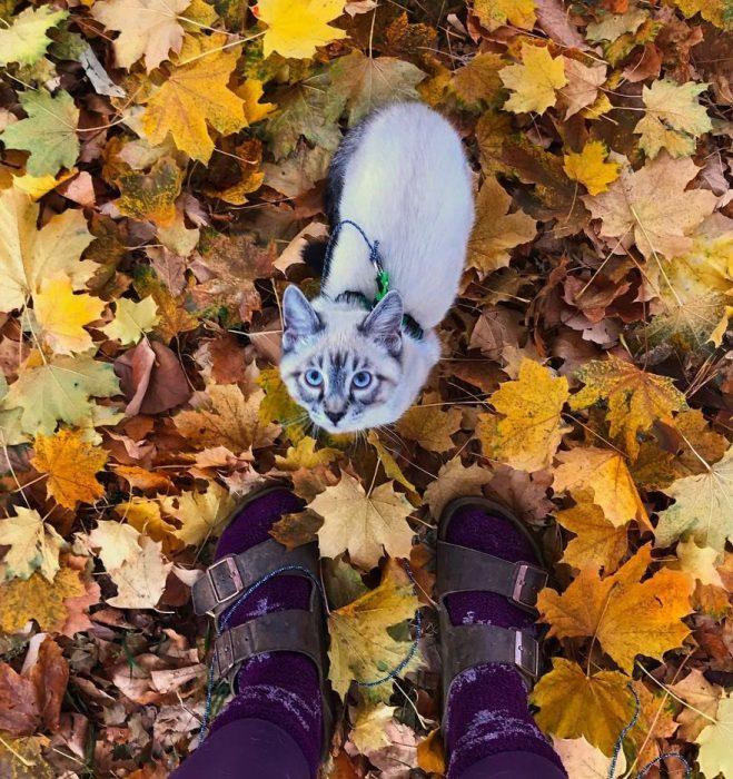 Perro y gato juntos en una aventura en la naturaleza