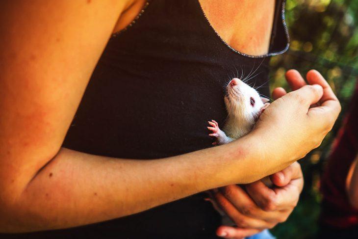ratita blanca abrazada