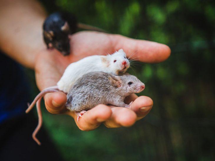 ratoncitos extrañados