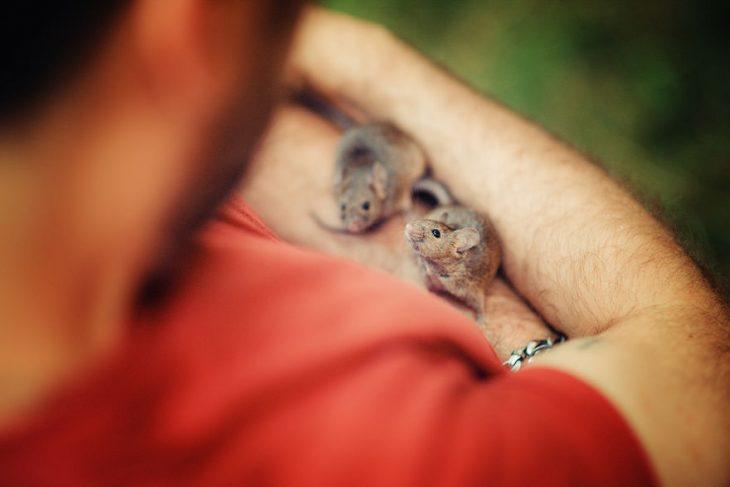 dos ratitas mirando