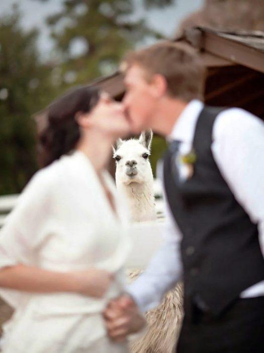por qué invitar animales a tu boda