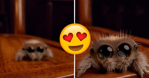 Cover No volverás a odiar a las arañas después de conocer a Lucas