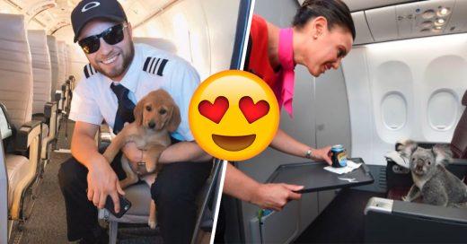 Cover vuelos con los mejores pasajeros