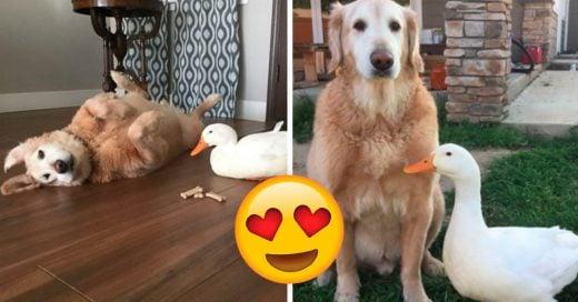 Cover Un perro y un pato demuestran que en la amistad no importan las especies