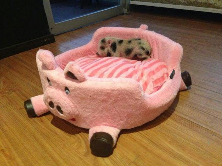camita cerdo