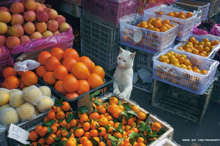 gatito naranjas