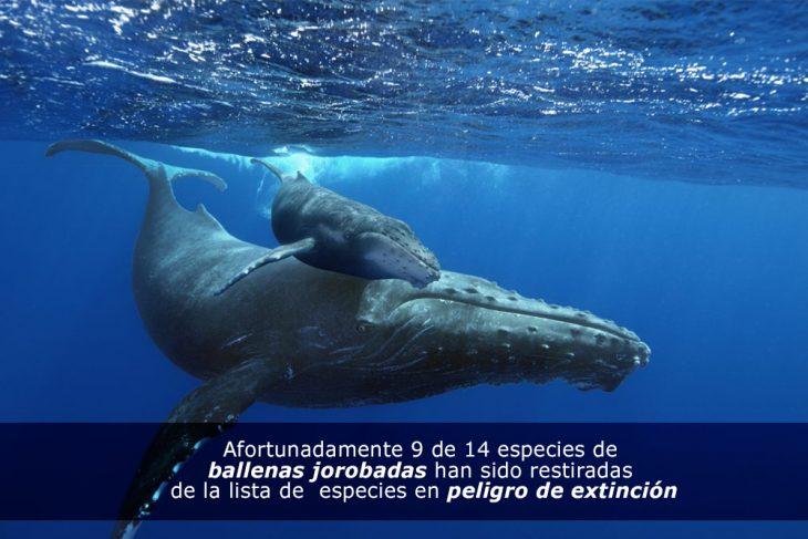 Salvemos a las ballenas