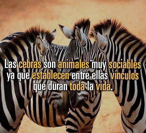 Datos increíbles de los animales