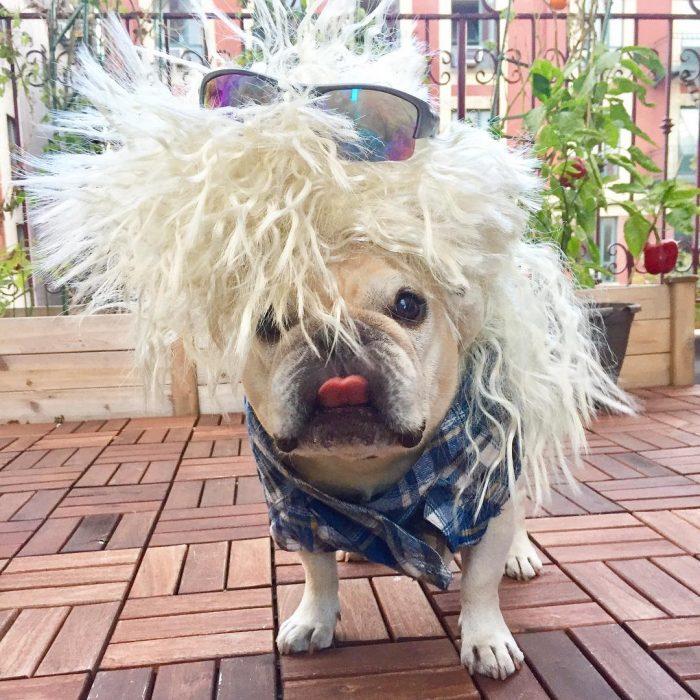 Pug rebelde