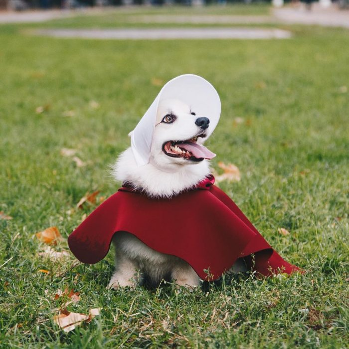Dogperucita roja