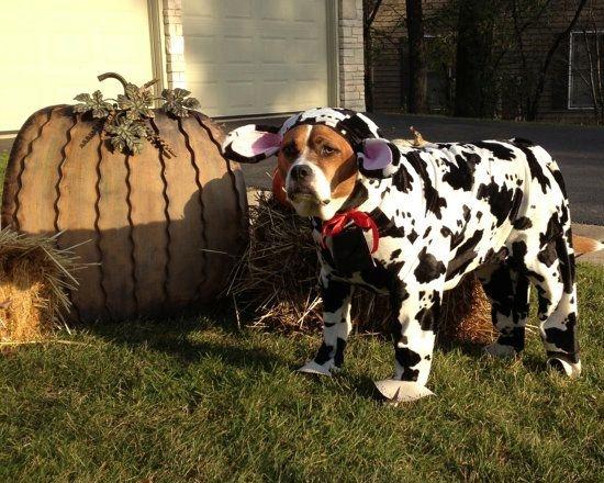 Perro-vaca