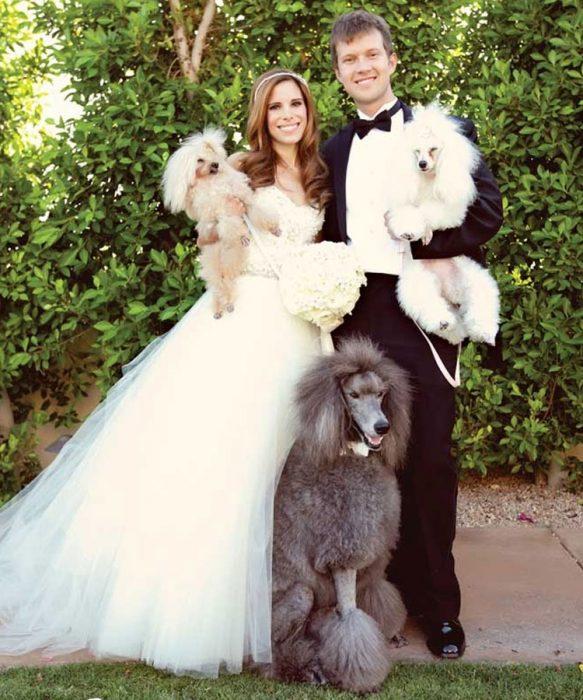 boda perros