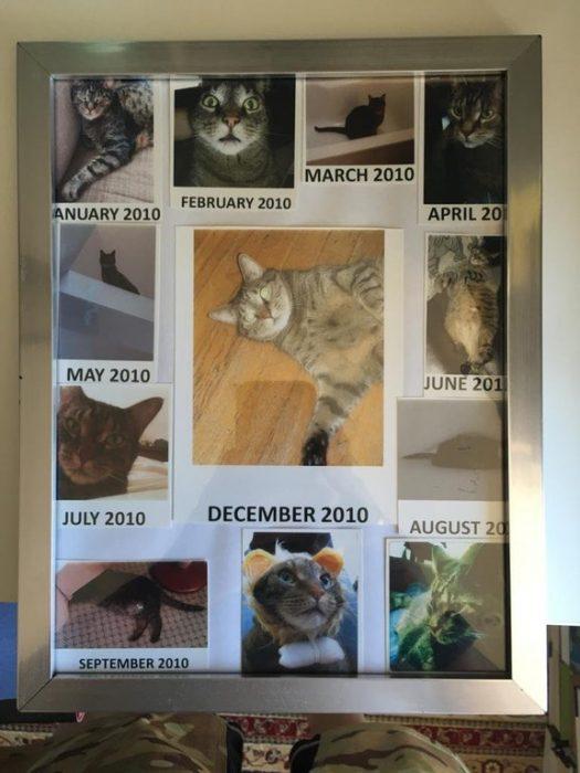 gato del mes