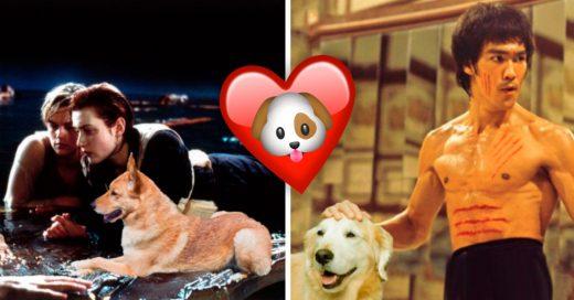 Cover Estos son los mejores 11 memes acariciando perritos que encontrarás en todo el maldito Internet