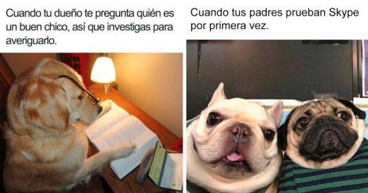 Cover Memes de perritos que todos necesitan en su vida