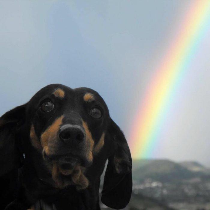 perrito arcoiris