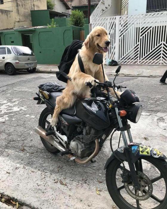 perrito moto
