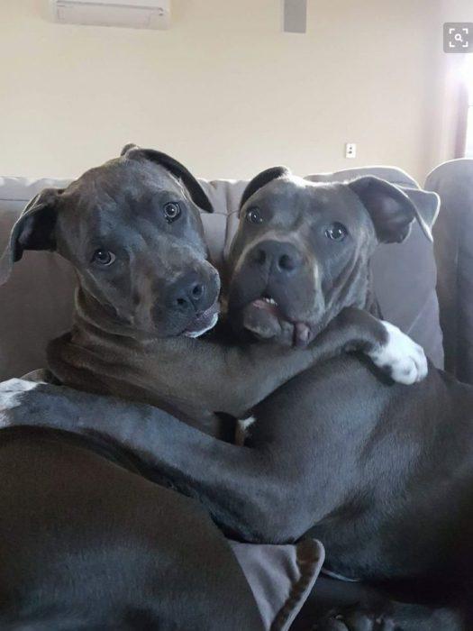 son mejor dos perros