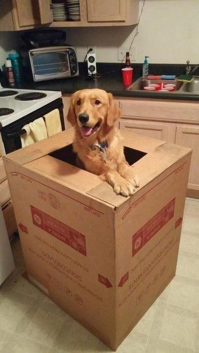 perritos caben en donde sea