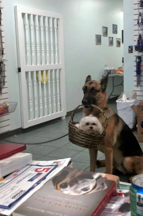 perrito cuida a asu hermano