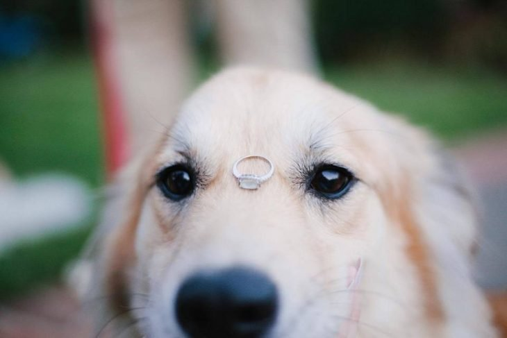 perrito anillo