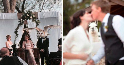 Cover Entradas triunfales del reino animal en las bodas