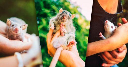 Cover Fotografió a ratas y ratones que pasaron sus vidas en un laboratorio