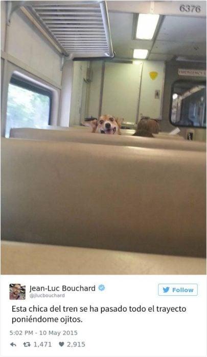perrito tren