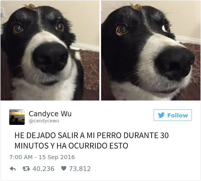 perrito caracol
