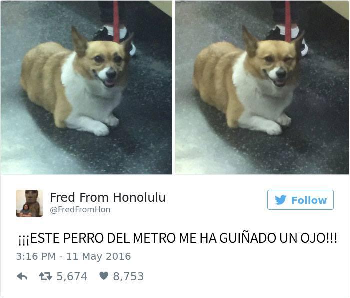 perro tuit coqueto