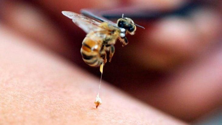 piquete abeja