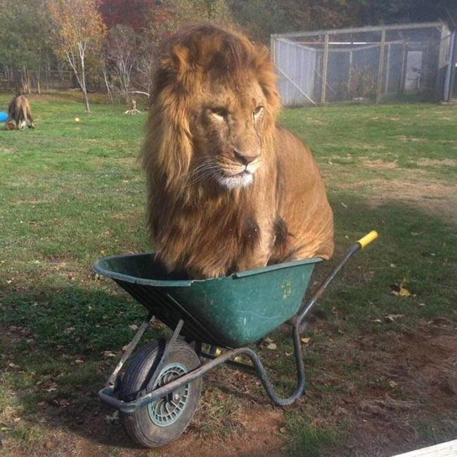 leon carretilla