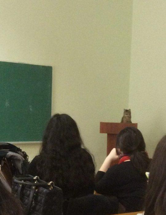gato conferencia