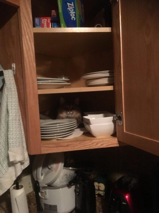 gato en gabinete