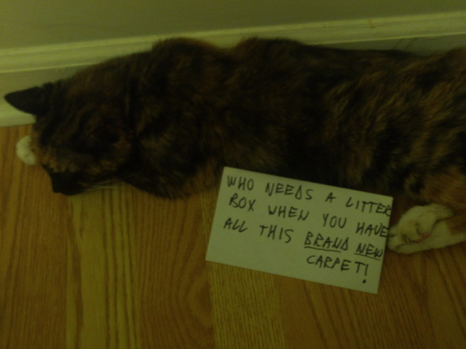 gato carpet