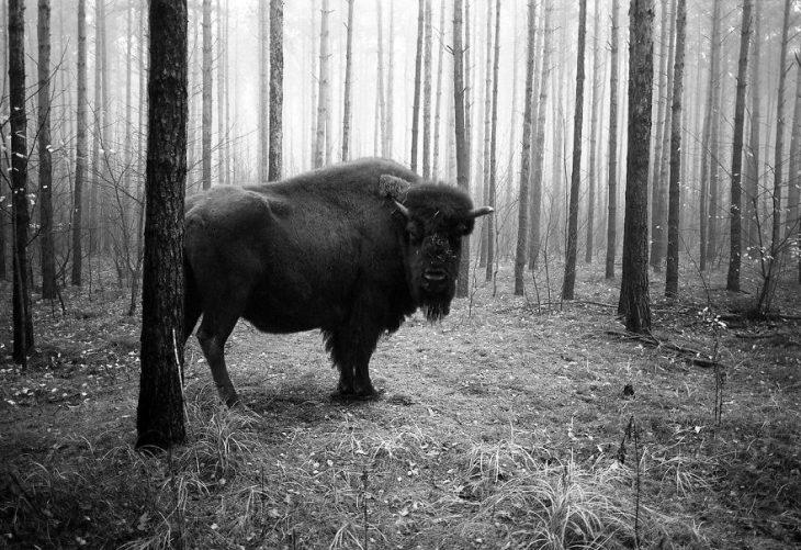 Animalitos del zoológico fotografías editadas para liberarlos