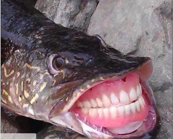 pez ccn dientes
