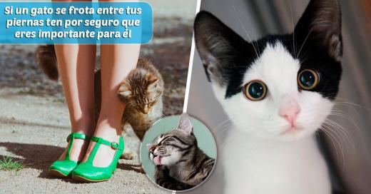 El poder de los gatos