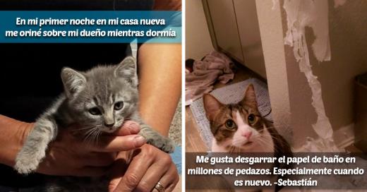 Gatos de la vergüenza