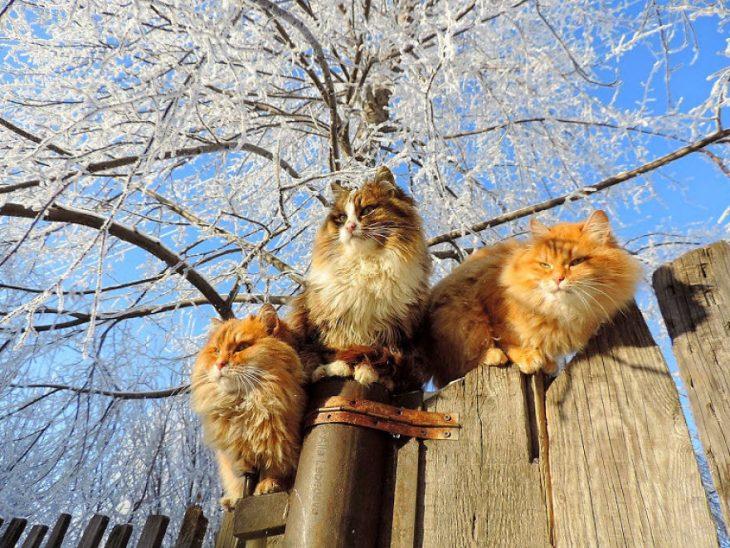 gatos arbol congelado